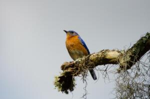 bluebird.2.ww.5.2.18